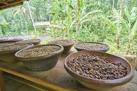 قهوه سبز اندونزی