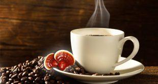 فروش عمده قهوه گانودرما