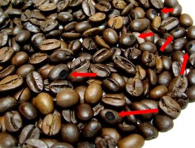 دانه قهوه روست شده