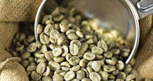 واردات دانه قهوه خام عربیکا و روبوستا