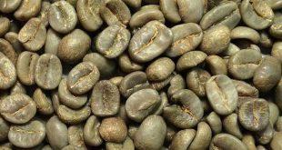 قیمت عمده قهوه سبز عربیکا کلمبیا